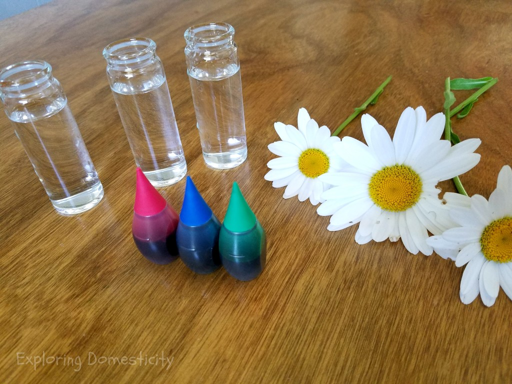 ABCs of Summer - Color Changing Daisys